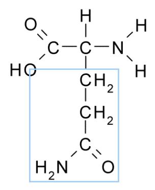 Figure 1 : structure chimique de la glutamine