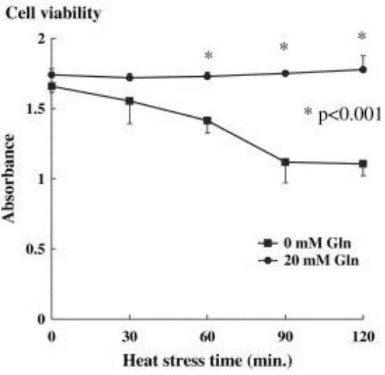 Figure 15 : survie des cellules au stress thermique avec et sans glutamine