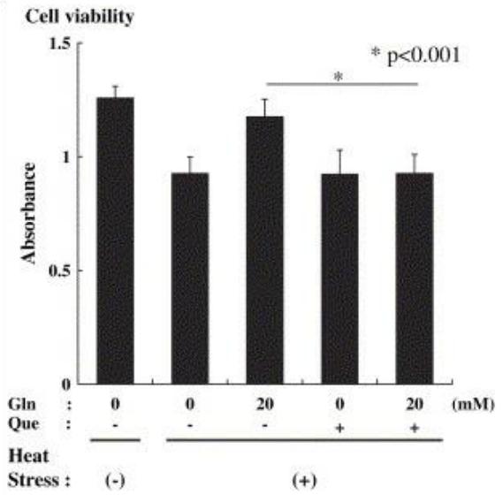Figure 16 : survie des cellules au stress thermique avec et sans glutamine et/ou quercétine