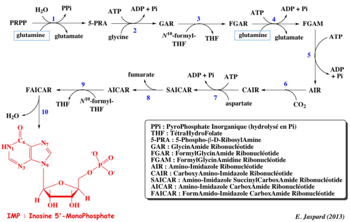 Figure 5 : voie de synthèse de l'Inosine-5'-MonoPhosphate (IMP)