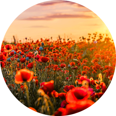 coquelicot solution sommeil