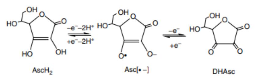Figure 4 : représentation du système redox de la vitamine C (4)