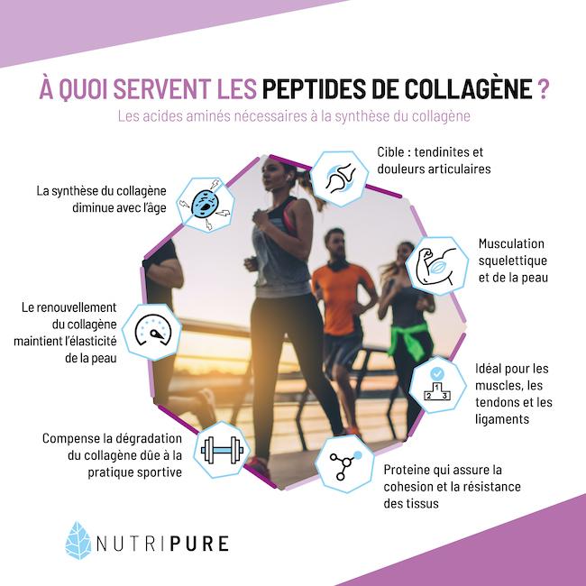 à quoi servent les peptides de collagène Peptan